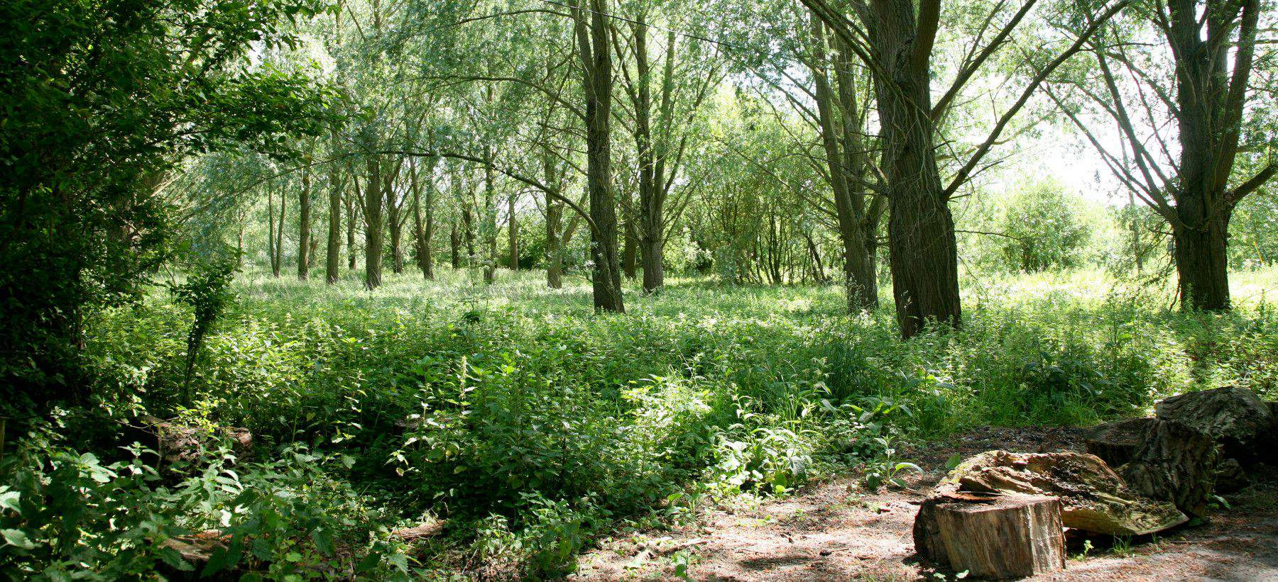 charvil-woods-milestone-ave